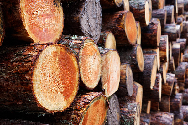 Shadbolt guidance on EU Timber regulations to stop illegal logging